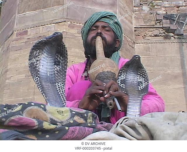 A snake charmer plays music for two cobra snakes in India