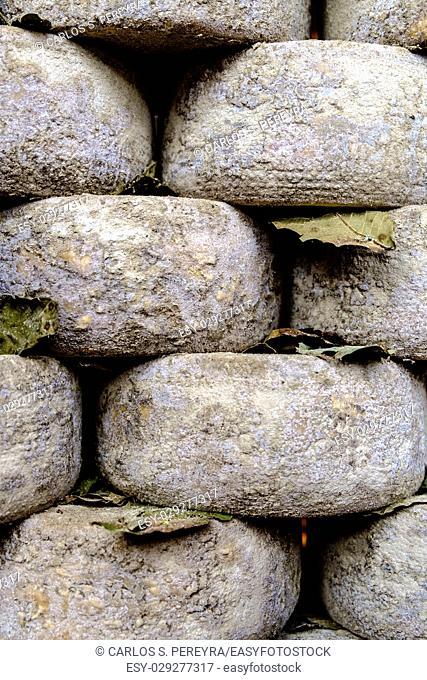 Pecorino cheese in Pienza Tuscany Italy