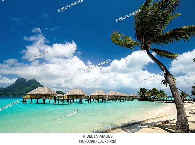 Palm trees and beach resort stilt houses, Bora Bora, French Polynesia
