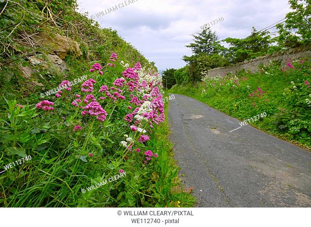 Country road in County Dublin, Ireland