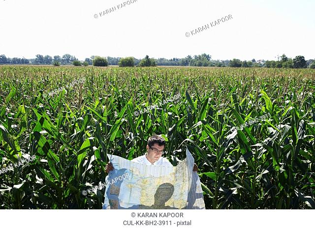 Businessman with map in cornfield