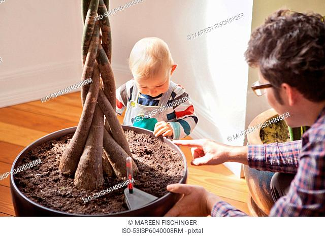 Father and baby boy with potted plant