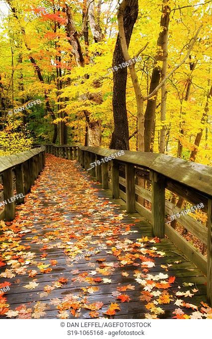 Autumn colours, Midwest USA