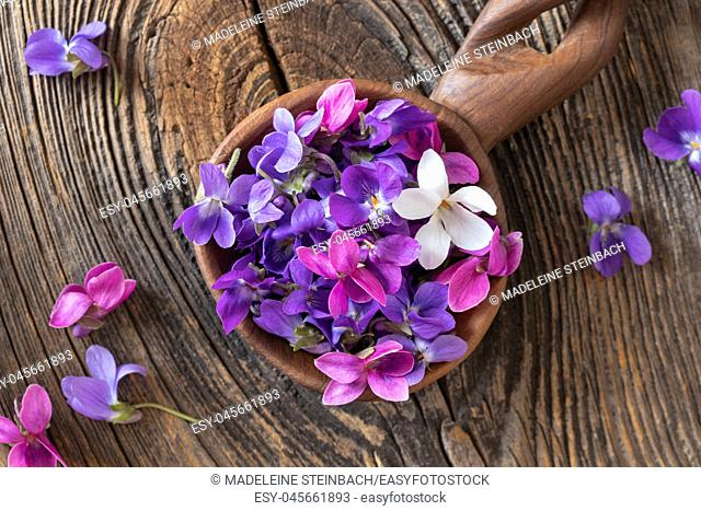 Wood violet flowers on a wooden spoon, top view