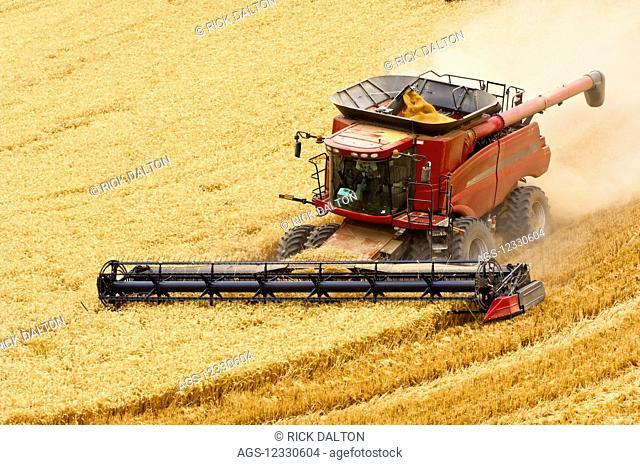 A Combine Harvesting Grain In The Palouse Region Of Eastern Washington; Washington, United States Of America