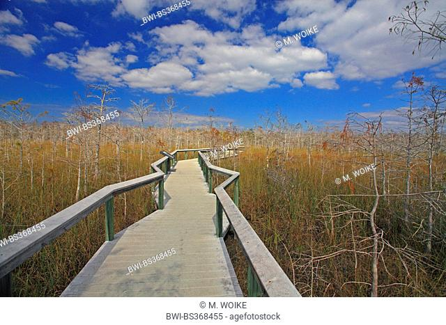 boarded footpath in the Everglades National Park, USA, Florida, Everglades National Park