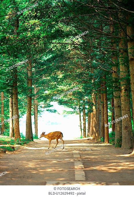 deer, nature, tree, road, scenery, film