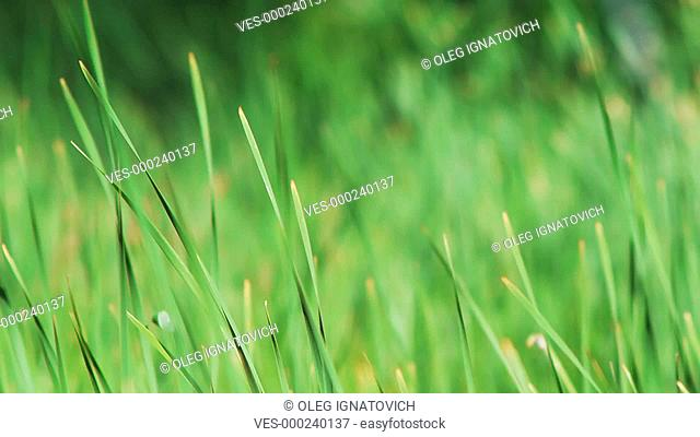 Wind in grass – shallow depth of field