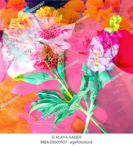 montage of flower photographies