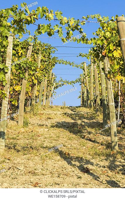 Barolo,Cuneo Province,Piedmont,Italy