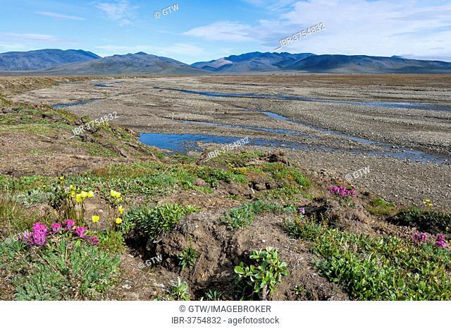 Riverbed, Doubtful River, near Doubtful Village, Wrangel Island, Far Eastern Federal District, Russia