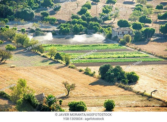 Spain, Balearic Islands, Mallorca, Montuiri, Cultivated