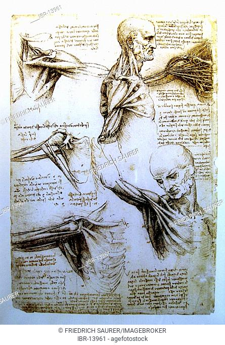 Anatomical design of Leonardo da Vinci. Medical studies of the human body. Anatomical study sheet of which with the Leonardoausstellung in the Oekopark Hartberg...