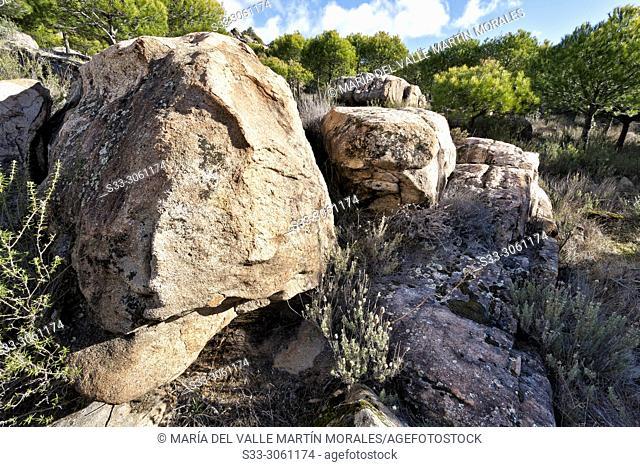 Granite between pines in Alcornocoso hill. Cadalso de los Vidrios. Madrid. Spain