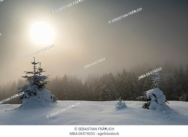Foggy sunrise in wintry alpine rolling landscape. In the foreground trees, in the background snow-covered coniferous forest and the sun rising in the fog