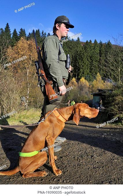 Dog, Hungarian vizla Canis domesticus - Ardennes, Luxembourg, Wallonia, Belgium, Europe