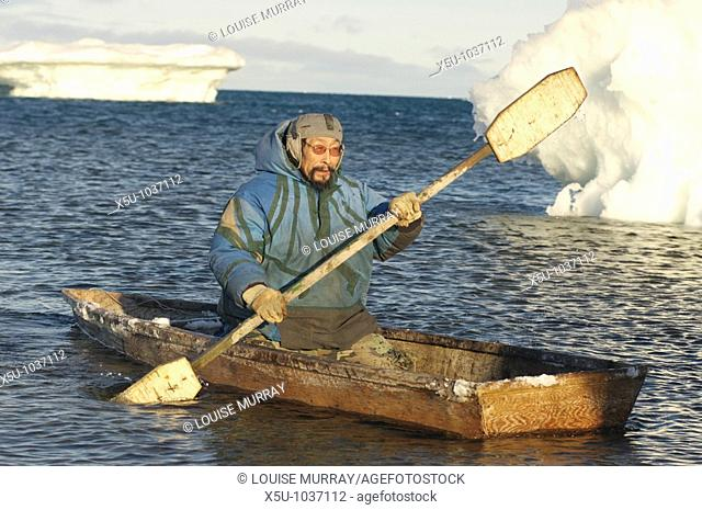 John Arnatsiaq, Inuit hunter paddling a kayak amongst pack ice  The kayak is used to retrieve seals that have been hunted from the water Igloolik or Iglulik