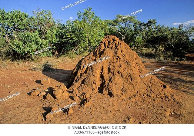 Termite Mound, Limpopo Province, South Africa