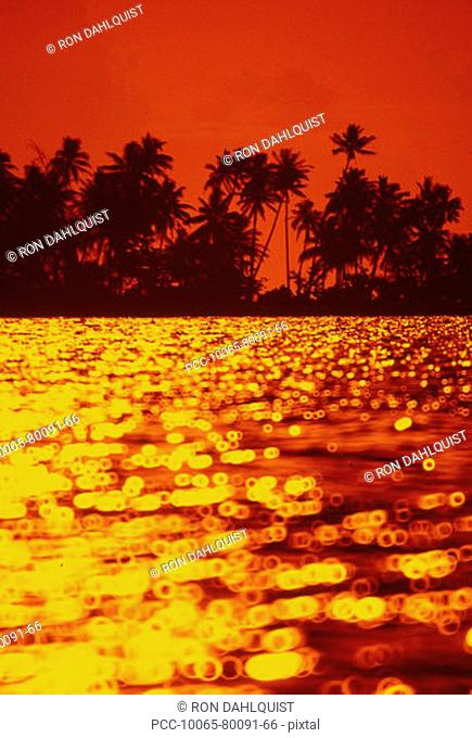 Fiery red and yellow reflection of sunset on the ocean, Palm trees silhoueeted by orange sky