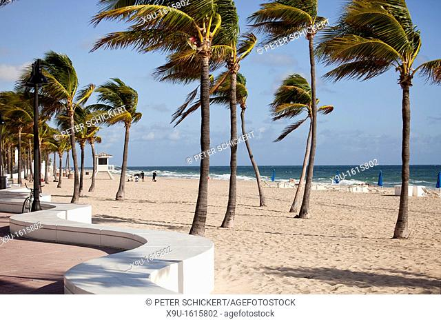 sandy beach and palmtrees in Fort Lauderdale, Broward County, Florida, USA