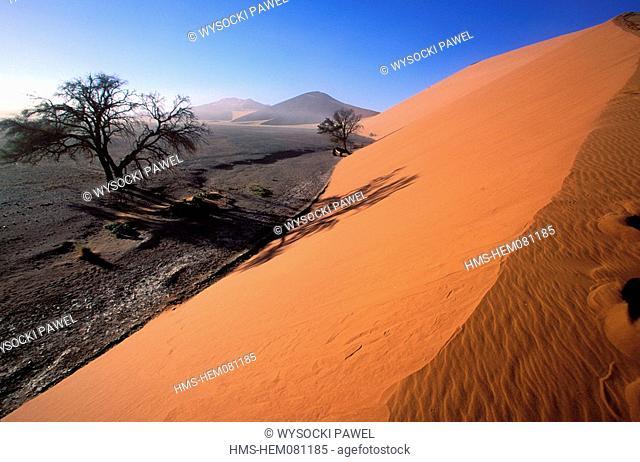 Namibia, Namib desert, Naukluft Park dunes, near the Sossusvlei dunes