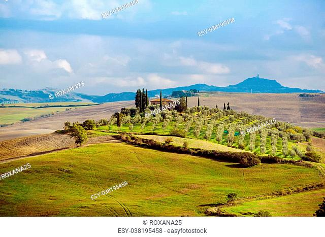Rural landscape with fields, olive trees and blue sky - Tuscany, Italy