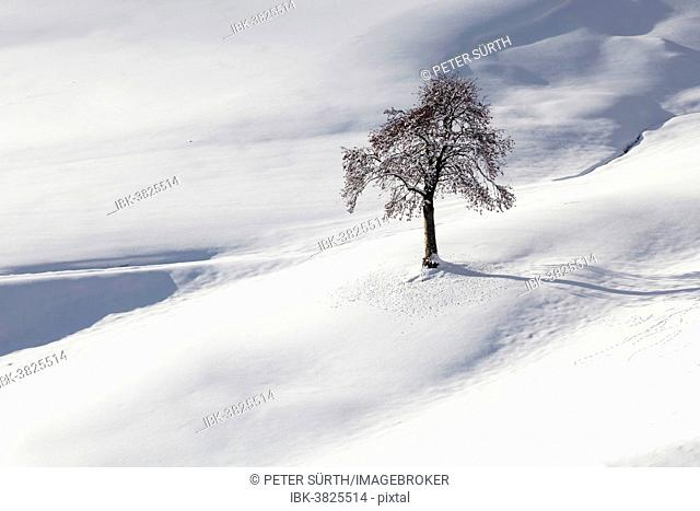 Tree surrounded by snow, Tyrol, Austria