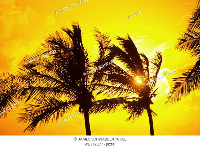 Palm trees silhouetted aganist sunset sky in Key Largo in the Florida Keys