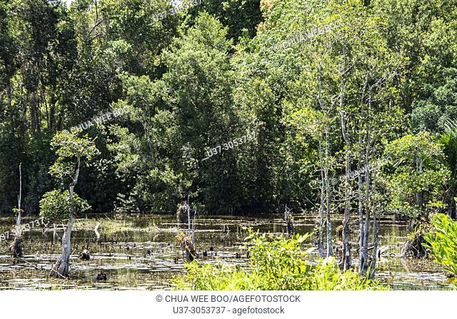 Pond at Kuching-Lundu roadside, Sarawak, Malaysia