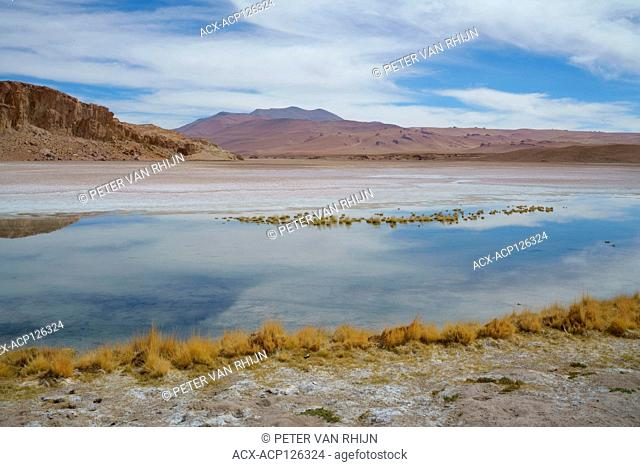 Half salt,half water,this altiplano lake in the Atacama desert is a very unusual ecosystem. Located at roughly 13.000 ft. Chile, South America