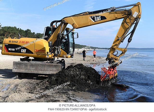 20 June 2019, Mecklenburg-Western Pomerania, Binz: An excavator fishes a mixture of red algae and seaweed from the beach of the Baltic seaside resort Binz