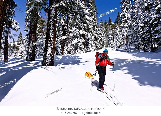 Backcountry skier pulling a sled, Ansel Adams Wilderness, Sierra Nevada Mountains, California USA