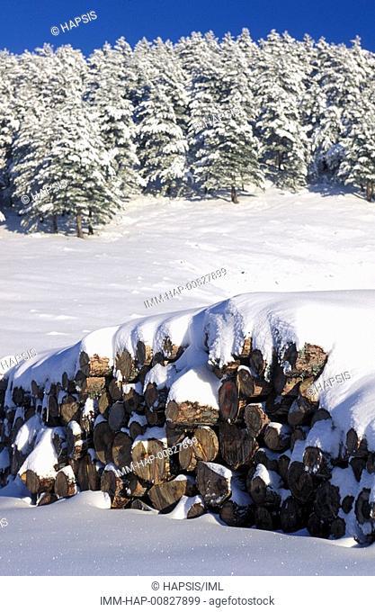 Mount Falakro, trees, wood, Drama, Macedonia East, Greece