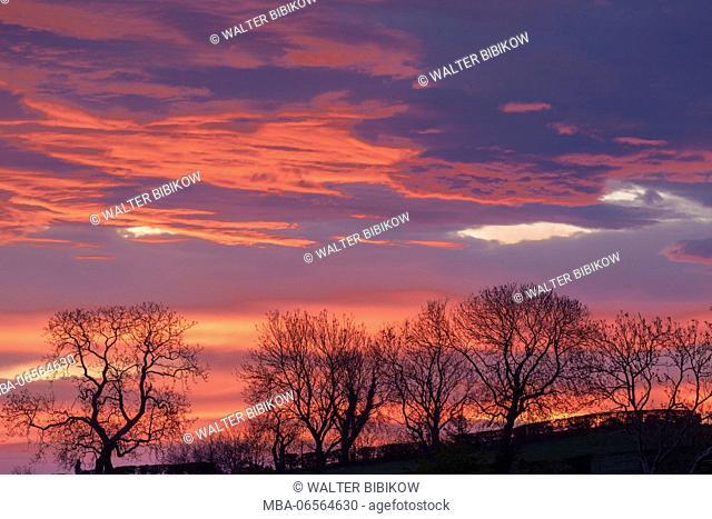 UK, Northern Ireland, County Antrim, Ballymoney, sunrise by The Dark Hedges