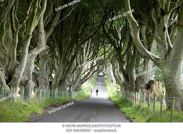 Dark Hedges, County Antrim, Northern Ireland