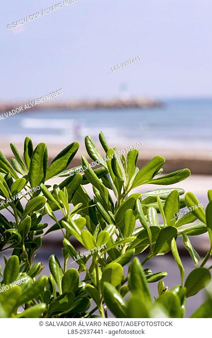 Unfocused view of the beach with plants closeup