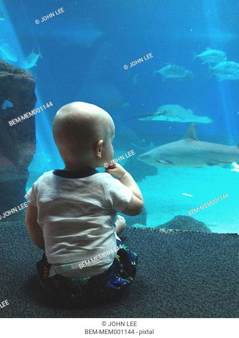 Caucasian baby admiring fish in aquarium
