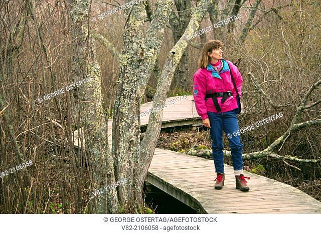 Red Maple Swamp Trail, Cape Cod National Seashore, Massachusetts