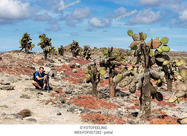 Ecuador, Galapagos Islands, Plaza Sur, man photographing Opuntia echios