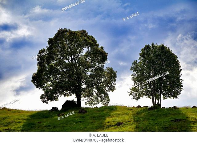 two leaf trees in front of the cloudy sky, Switzerland, Berner Alpen, Hoch-Ybrig