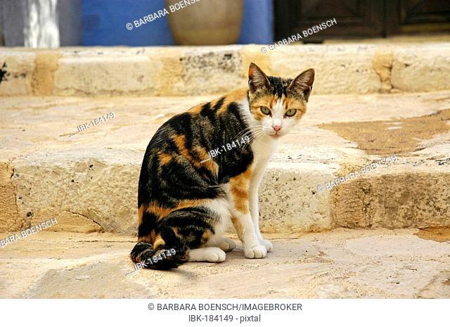 Street cat on stairs, Finestrat, Costa Blanca, Spain