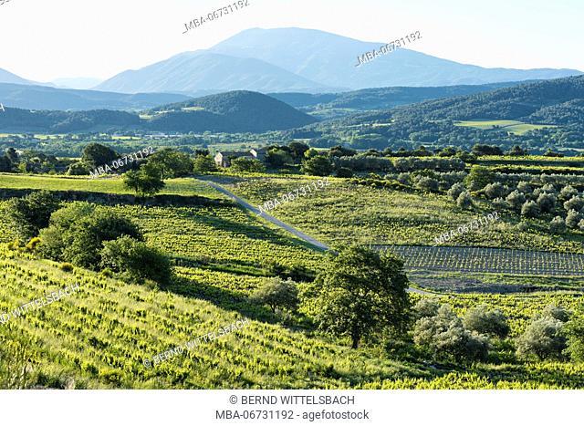 Roaix, Vaucluse, Provence, Provence-Alpes-Côte d'Azur, France, vineyards near Roaix, Arondissement Carpentras