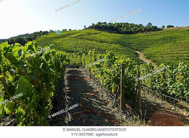 Bodega Mas Perinet. integrada en Montsant, que es una denominación de origen establecida en 2002 e integrada por los municipios y bodegas que, hasta esa fecha