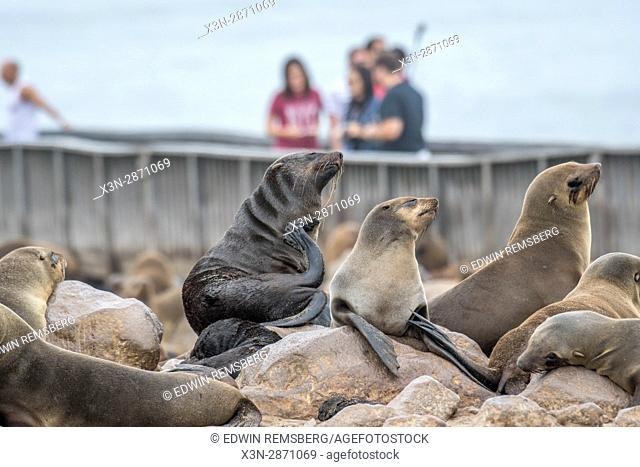 Cape fur seals resting on rocks while tourists are observing in the background at the Cape Cross Seal Reserve, located in Namibia, Africa