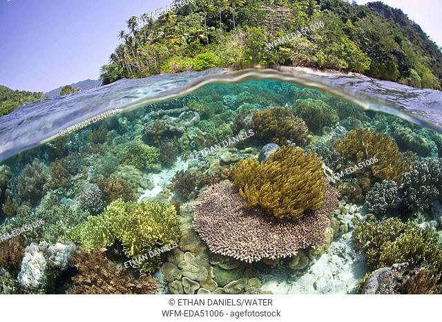 Shallow Coral Reef, Raja Ampa, West Papua, Indonesia