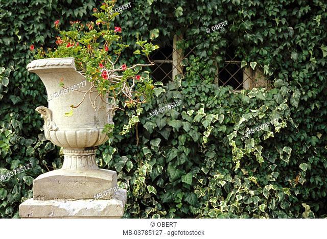 Chile, Santiago de Chile, garden, Pflanzgefäß, flowers, ivy  South America, stone vase, vase, stone, broken, damages, decoration, facade, green