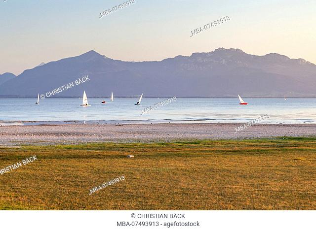 Sailboats at a regatta on the Chiemsee behind it the Chiemgau Alps, Seebruck am Chiemsee, Chiemgau, Upper Bavaria, Bavaria, southern Germany, Germany, Europe