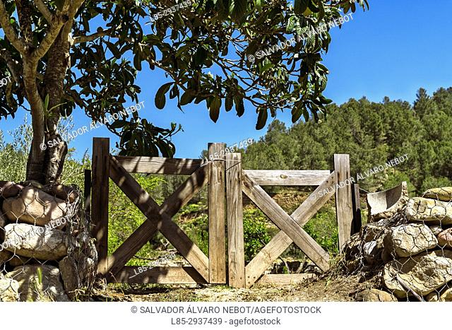 Rural scene of midday, Spain