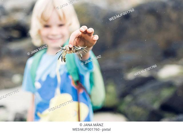 Boy holding crab on beach