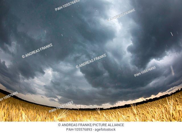 Thunderstorms above Brandenburg - dark thunderclouds seen above a cornfield in Lusatia (Welzow, Brandenburg), 10 Jun 2018 | usage worldwide